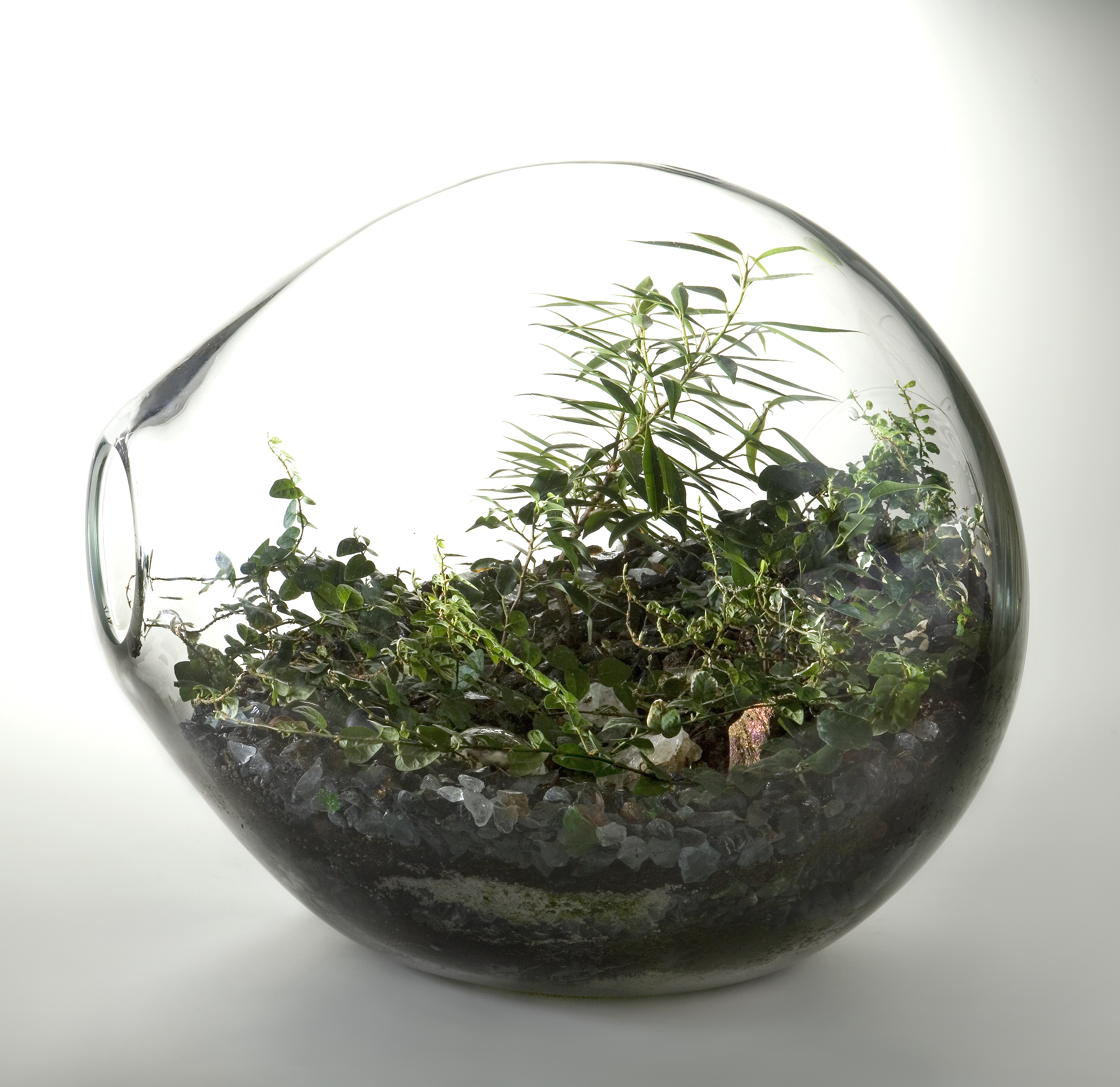 Terrariums Let Anyone Create A Perfect World In Their Own Apartment Artsy